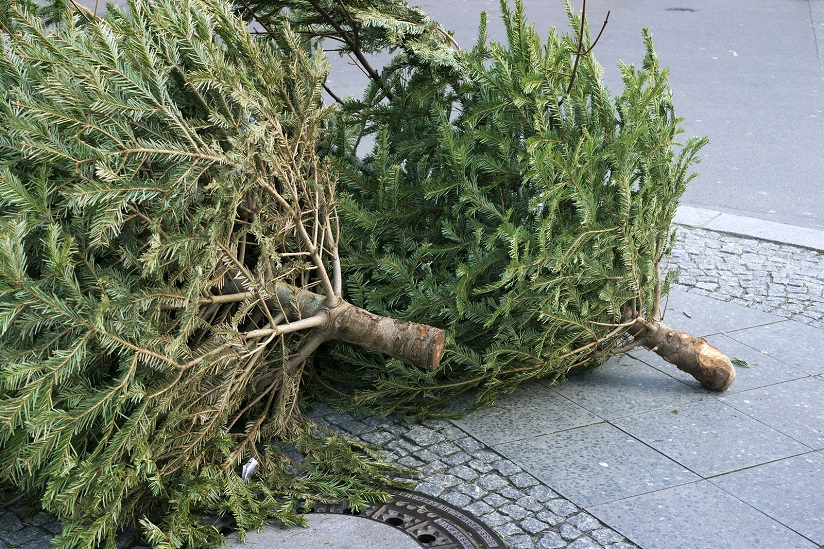 Fly tipped Christmas tree discarded on UK pavement.